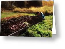 Harvesting The Crop Greeting Card