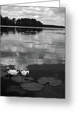 Haukkajarvi Water Lilies In Bw Greeting Card