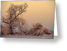 Frost 2 Greeting Card