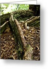 Hawaiian Cypress Greeting Card