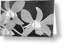 Hawaiian Floral Detail Greeting Card