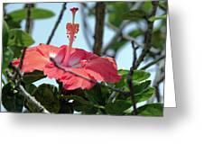 Hawaiian Hibiscus Greeting Card