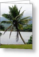 Hawaiian Palm Greeting Card