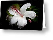 Hawaiian White Hibiscus Greeting Card