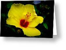 Hawaiian Yellow Hibiscus Greeting Card