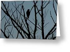 Hawk 4 Greeting Card