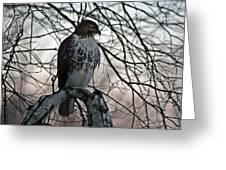 Hawk 6 Greeting Card