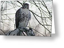 Hawk 9 Greeting Card