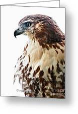 Hawk Majesty Greeting Card