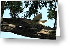 Hawk On The Move Greeting Card