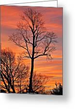 Hawk Watching The Sunrise Greeting Card