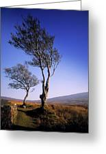 Hawthorn Trees In Sally Gap, County Greeting Card