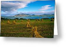 Hay Bales In A Field, Ireland Greeting Card