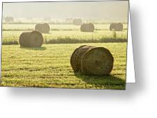 Hay Bales In Mist At Sunrise Greeting Card