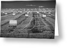 Hay Bales On A Farm In Alberta Greeting Card