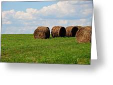Hay Hay Hay Greeting Card