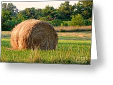 Haybale Greeting Card by Louise Peardon