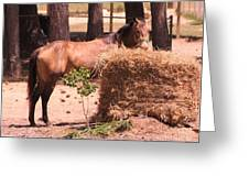 Hay's For Horses Greeting Card