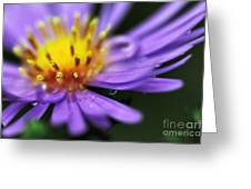 Hazy Daisy... With Droplets Greeting Card