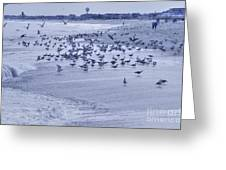 Hdr Seagulls At Play In The Sand Greeting Card by Pictures HDR