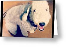 He Looks Like A Sheep! Lol 🐶 Greeting Card by Nena Alvarez