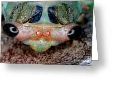Head Of Cicada Greeting Card