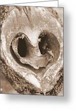 Heart Center Of A Walnut Shell Greeting Card by Maureen  McDonald