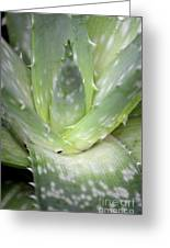 Heart Of An Aloe Greeting Card