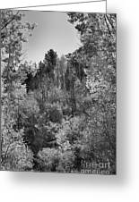 Heart Of The Aspen Forest Greeting Card