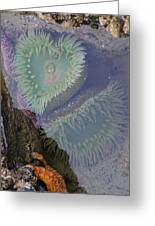 Heart Of The Tide Pool Greeting Card