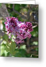 Heart Shaped Lilac Greeting Card