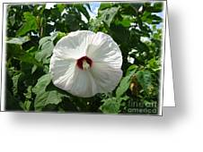 Hearty Hibiscus Greeting Card