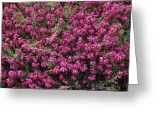 Heather 'nathalie' Flowers Greeting Card