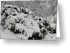 Heavy With Snow Greeting Card