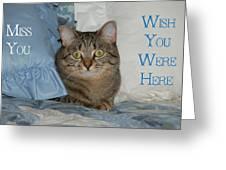 Heidi Cat Miss You Greeting Card