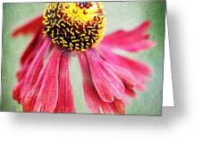 Helenium Flower 2 Greeting Card