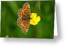 Heliconiinae Greeting Card