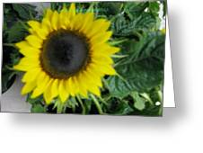 Helios Flower Greeting Card