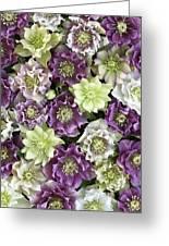 Hellebore Helleborus Sp Flowers Greeting Card