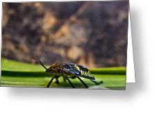 Hemiptera Nymph Walikng 1 Greeting Card