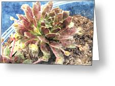 Hen And Chicks Plant Greeting Card