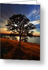Hensley Tree Greeting Card