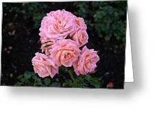 Her Roses Greeting Card