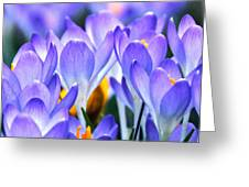 Here Come The Croci Greeting Card