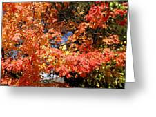 Here Today Gone Tomorrow Greeting Card