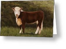 Hereford Heifer Greeting Card