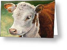 Herford Calf  Greeting Card