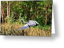 Heron Flying Along The River Bank Greeting Card