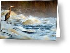 Heron In Centaur Shute Greeting Card
