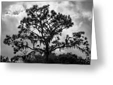 Heron In Pine Greeting Card